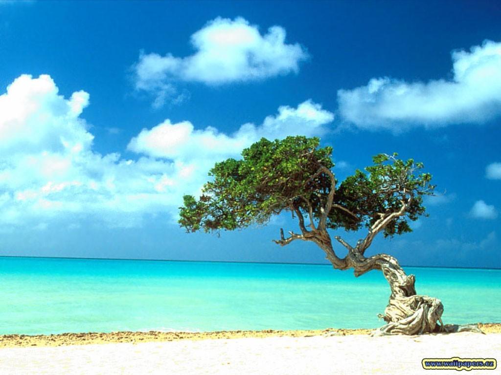 Baam und a strand...sche!
